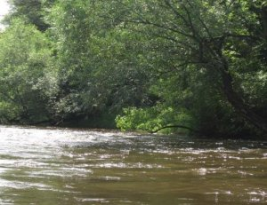Rum River Canoe Trip With Roberta