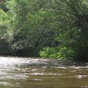 Thumbnail image for Rum River Canoe Trip