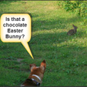 Thumbnail image for Is That A Chocolate Easter Bunny?!!