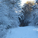 Thumbnail image for Early Snowfall Equals A Peaceful Walk